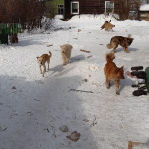 акция по сбору средств в помощь приюту для бездомных животных_2