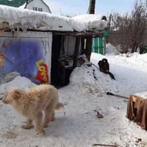 акция по сбору средств в помощь приюту для бездомных животных_3