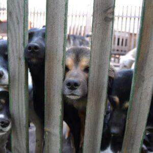 акция по сбору средств в помощь приюту для бездомных животных_5